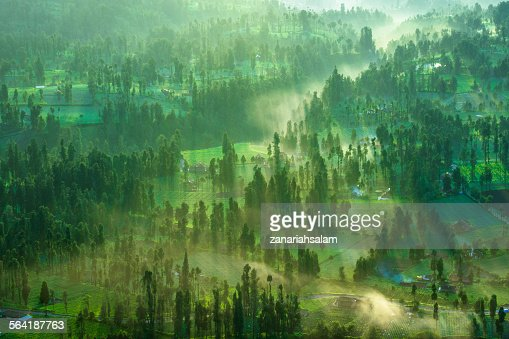 Misty Morning at Cemoro Lawang, Mount Bromo, East Java, Indonesia