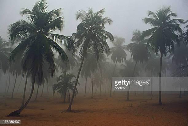 Brumeux matin en Afrique