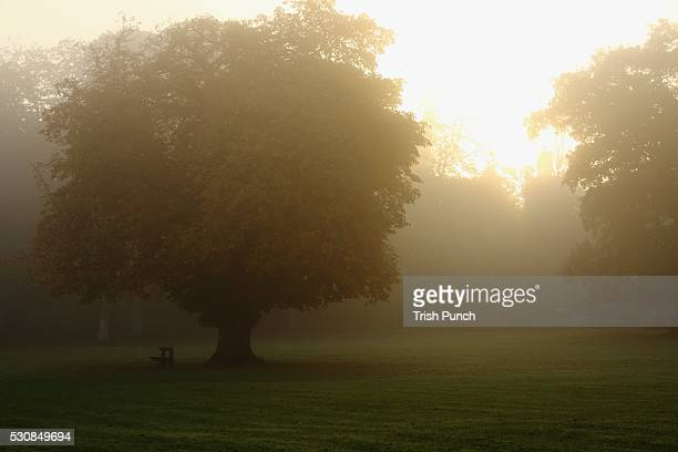 Misty morning in cahir in the munster region, county tipperary, ireland
