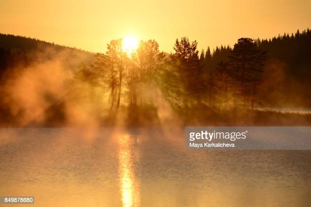 Misty morning lake with shadow of pine trees