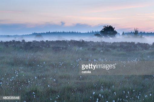 misty morning on marsh : Bildbanksbilder