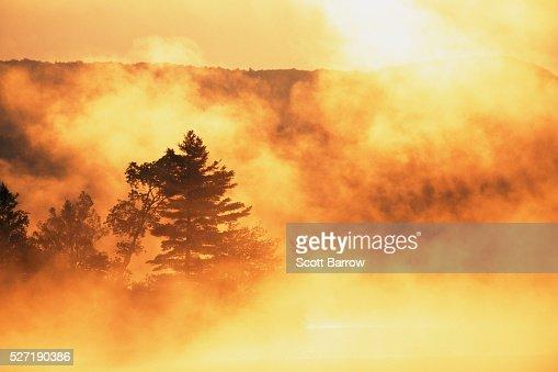 Misty morning : Stock Photo