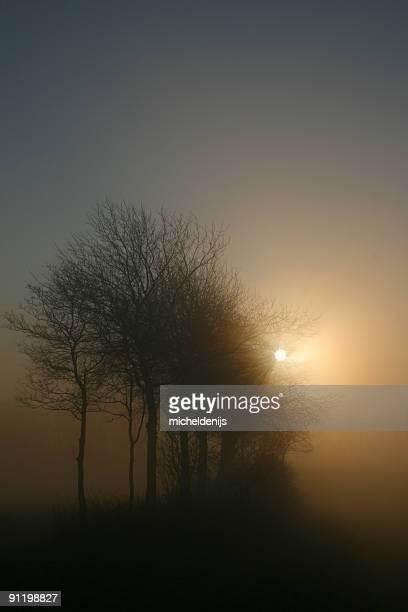Misty por la mañana