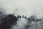 Misty mountain hills landscape, pine trees, Switzerland, Zermatt