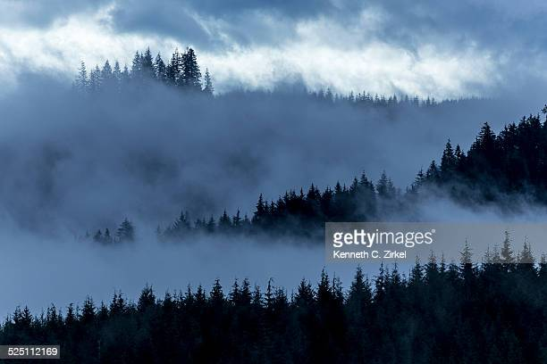 Misty Oregon pines