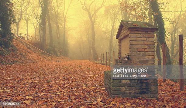 Misty place