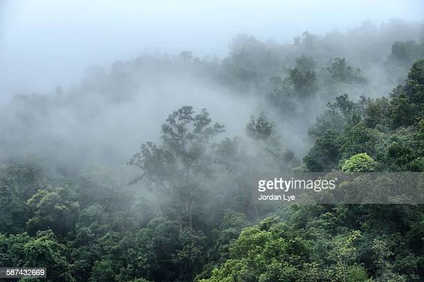 Misty rain forest