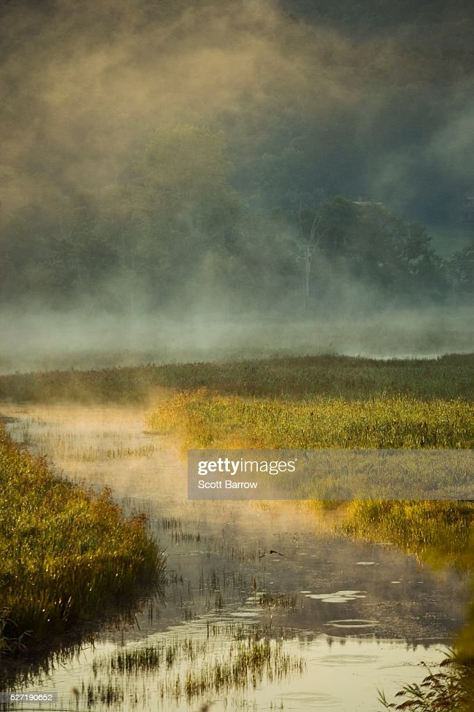 Misty river : Stockfoto