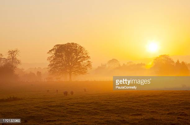 Misty lever du soleil dans Le Parc National de Yorkshire Dales
