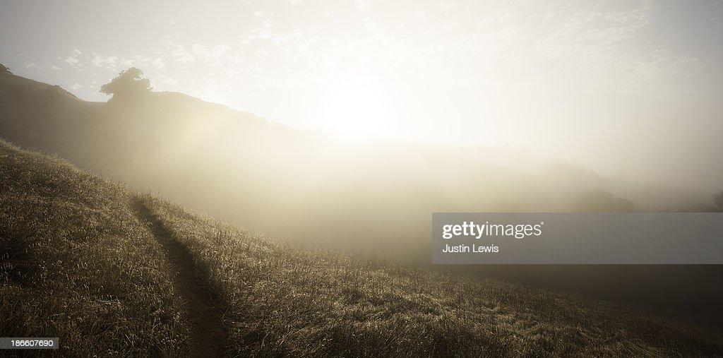 A misty sunrise on a grassy trail : Stock Photo