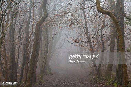 Misty track through winter woods