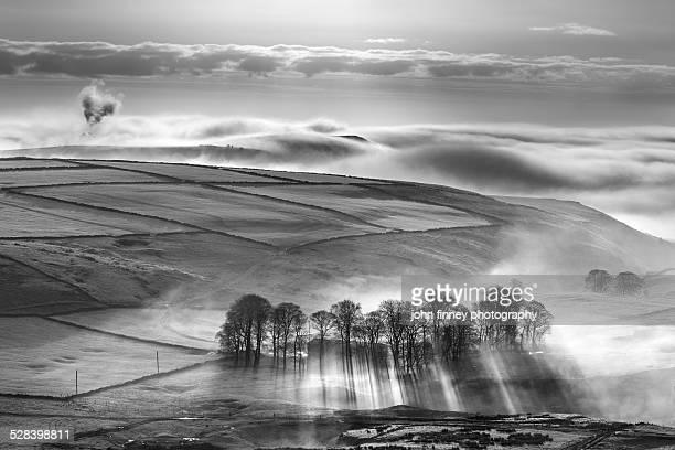 Misty trees landscape, Peak District