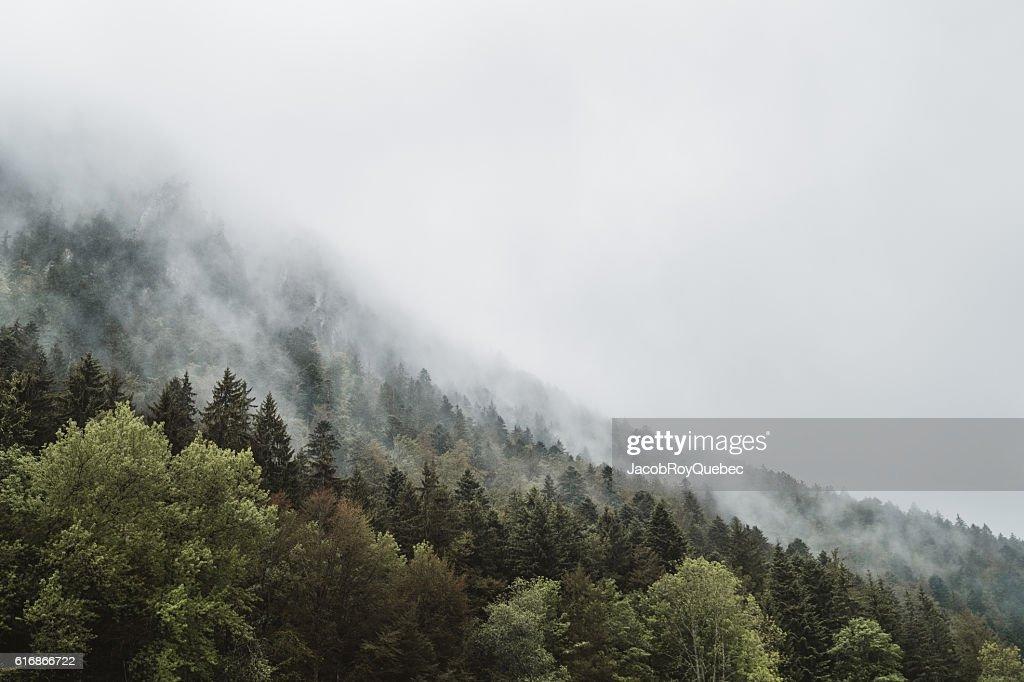 Misty Trees : Stock Photo