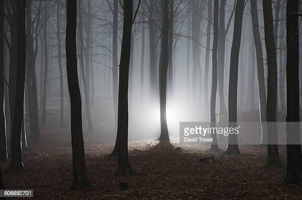 Misty winter forest in Denmark