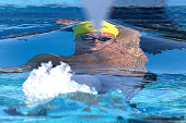 Mitch Larkin of Australia competes in the Men's 100 metre Backstroke during the 2016 Aquatic Superseries at HBF Stadium on February 5 2016 in Perth...