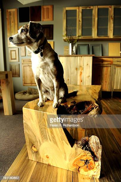 Mitsie Clay's dog sits atop a coffee table made of beetle kill wood Corbin Clay designs and builds custom furniture cabinetry and siding He has now...