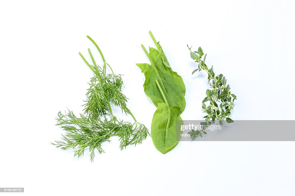 Mix Herb Sorrel dill thyme : Stock Photo