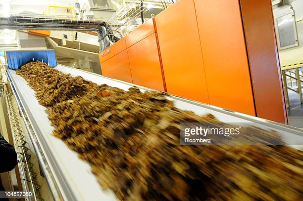 A mix of Burley Orient and Virginia tobacco leaves are transported by conveyor belt to drying drums at the newly refurbished Philip Morris CR AS...