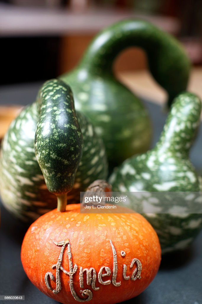 MONICA CA –– OCTOBER 19 2011––A mix of squashes including a custom–carved Kabocha squash with cookbook writer and farmer's market expert Amelia...