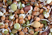 Mixed bean sprouts, close up