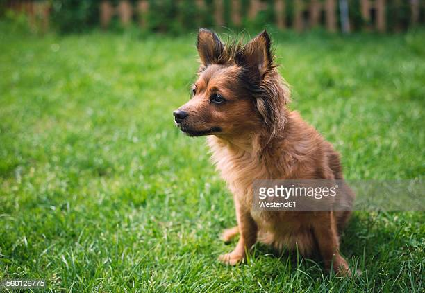 Mixed breed dog sitting on a meadow