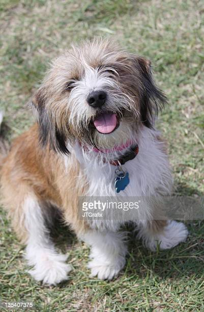 Mixed Breed Dog Wearing Tags