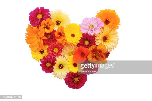 Mixed flowers in a heart shape on white : Stock Photo