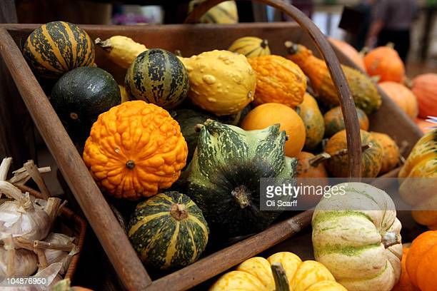 Mixed gourds are displayed at the Royal Horticultural Society's London Autumn Harvest Show on October 6 2010 in London England The show features...