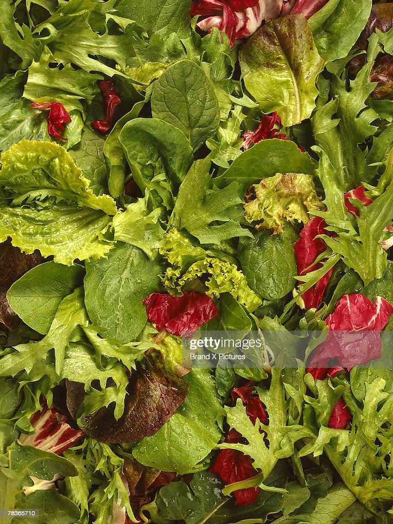 Mixed lettuce salad : Stock Photo
