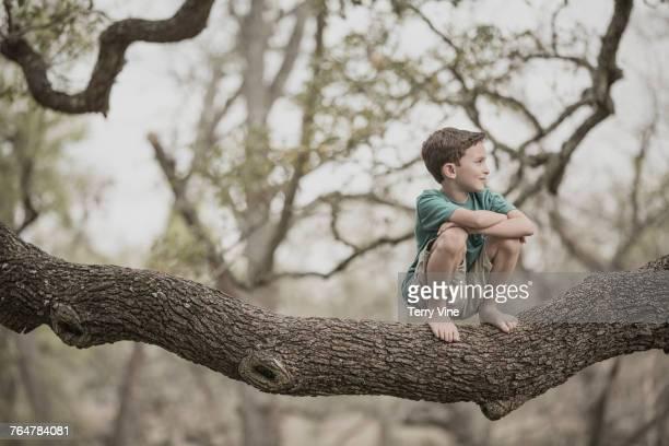 Mixed race boy crouching on tree branch