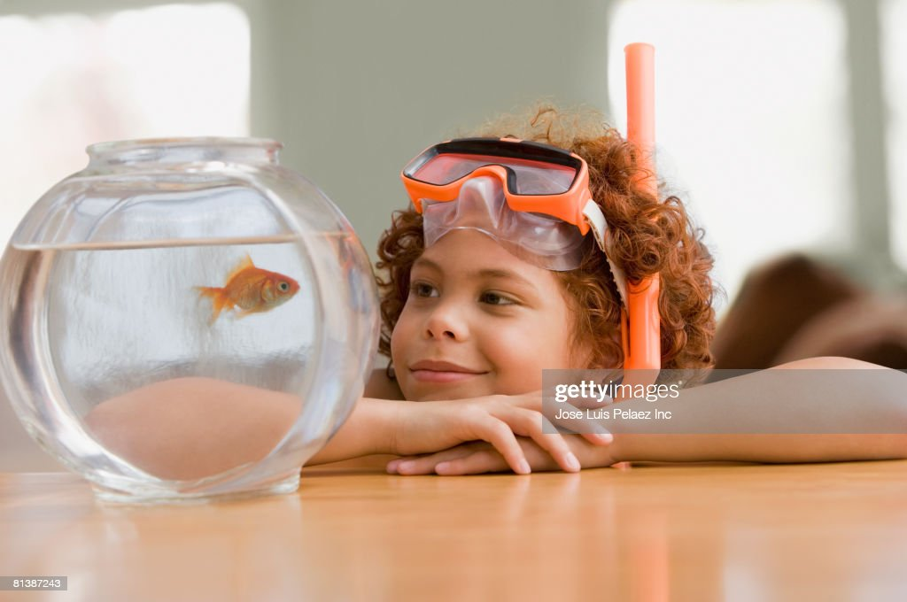 Mixed Race boy looking at fish in bowl : Stock Photo