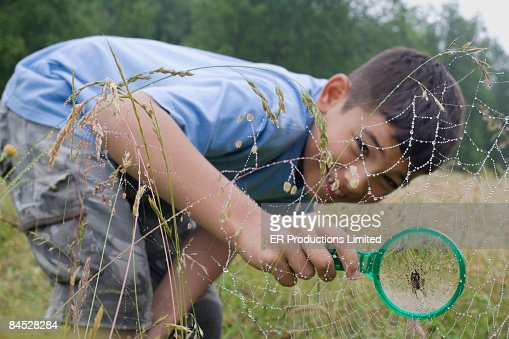 Mixed race boy looking at spider web with magnifying glass : Stock Photo