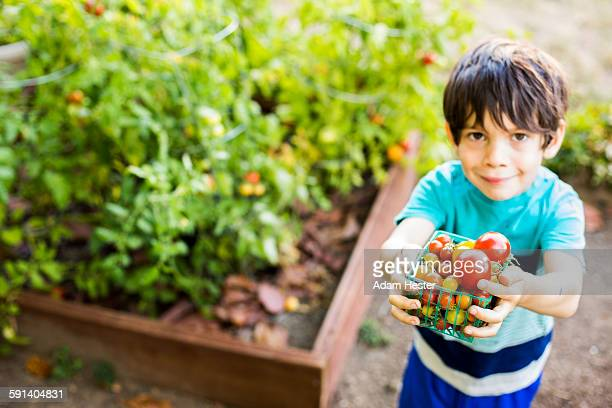 Mixed race boy picking vegetables in garden