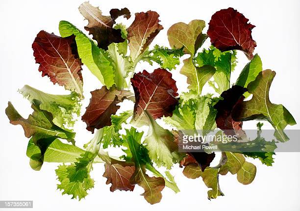 Mixed salad leaves on white background