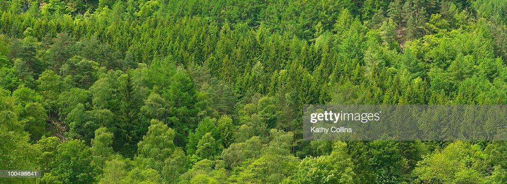 Mixed woodland on hillside : Stock Photo