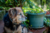 mixed-breed dog in a garden in a sunny day of spring