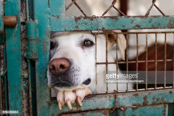 A mixed-breed dog looking sad behind a fence in a dog shelter in Mexico City