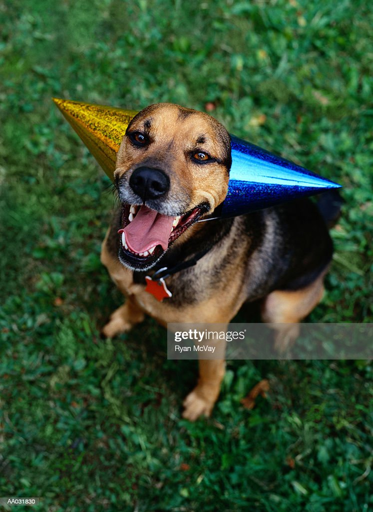 Mixed-Breed Dog : Stock Photo