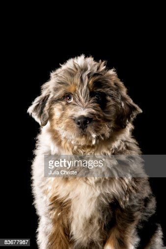 Mixed-Breed Dog, portrait : Stock Photo