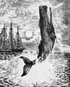 Moby Dick from Herman Melville 's 'MobyDick' Novel about search for a whale American author and poet 1 August 1819 – 28 September 1891