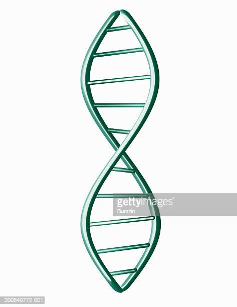 DNA model, against white background, (digitally generated)