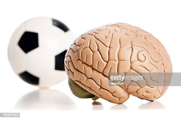 Model brain with soccer ball on perspex