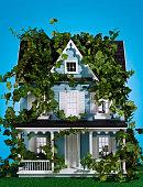 Casa modelo coberto de Hera, close-up