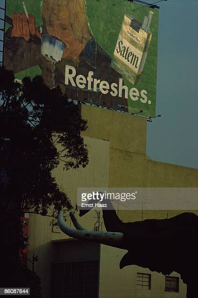 A model of a mammoth rises out of the La Brea Tar Pits Los Angeles March 1975