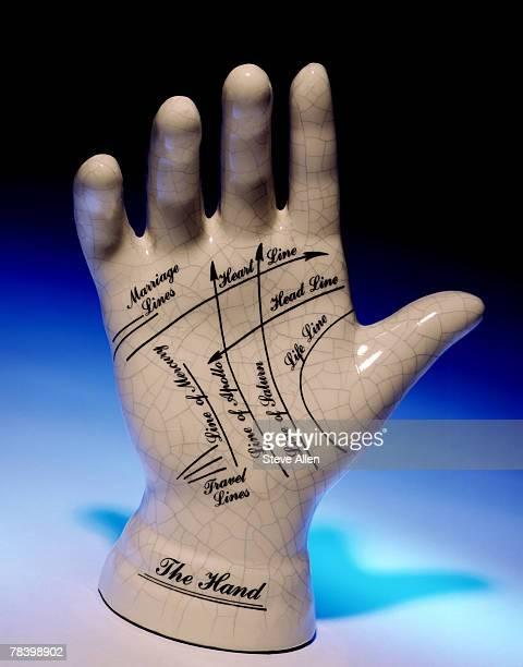 Model of hand