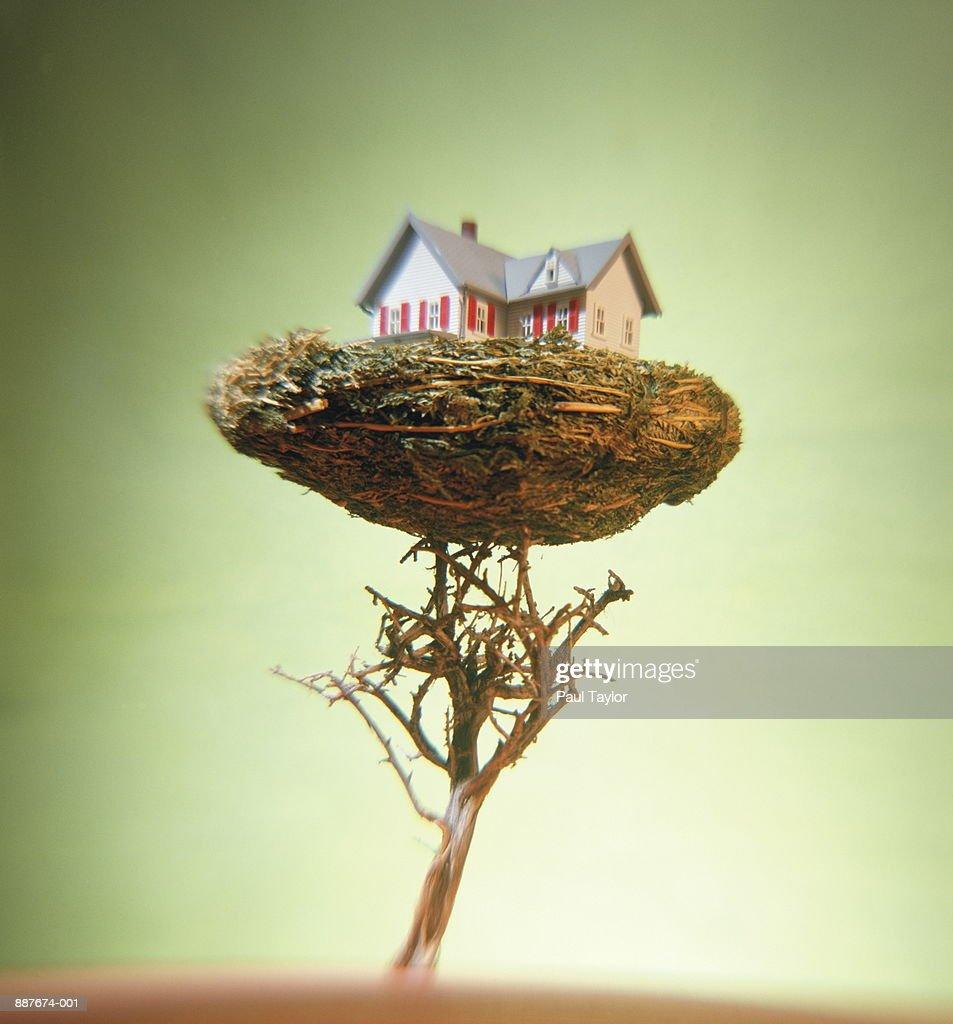 Model of house in nest