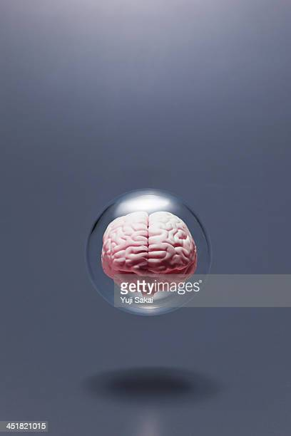 model of  human brain in glass globe
