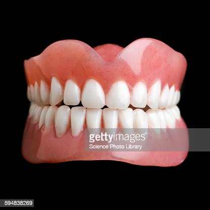 model of human teeth stock photo | getty images, Human Body