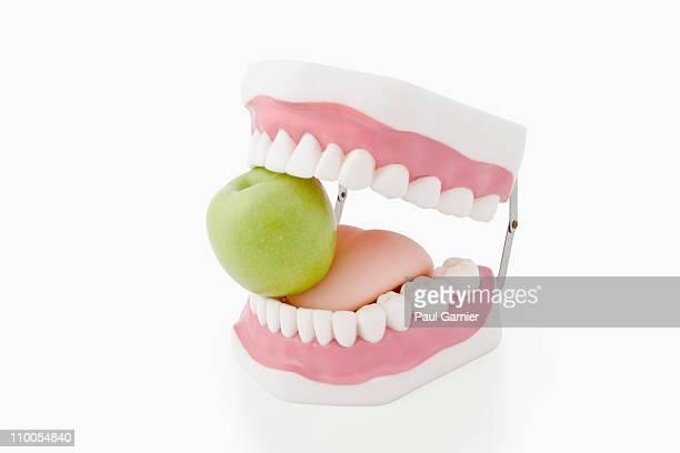 Model Teeth biting apple