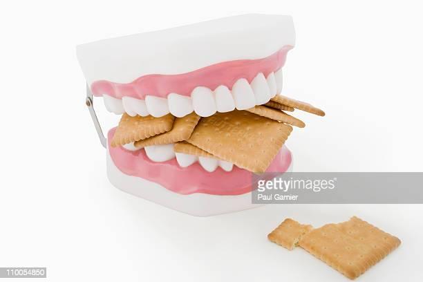 Model teeth biting cookies
